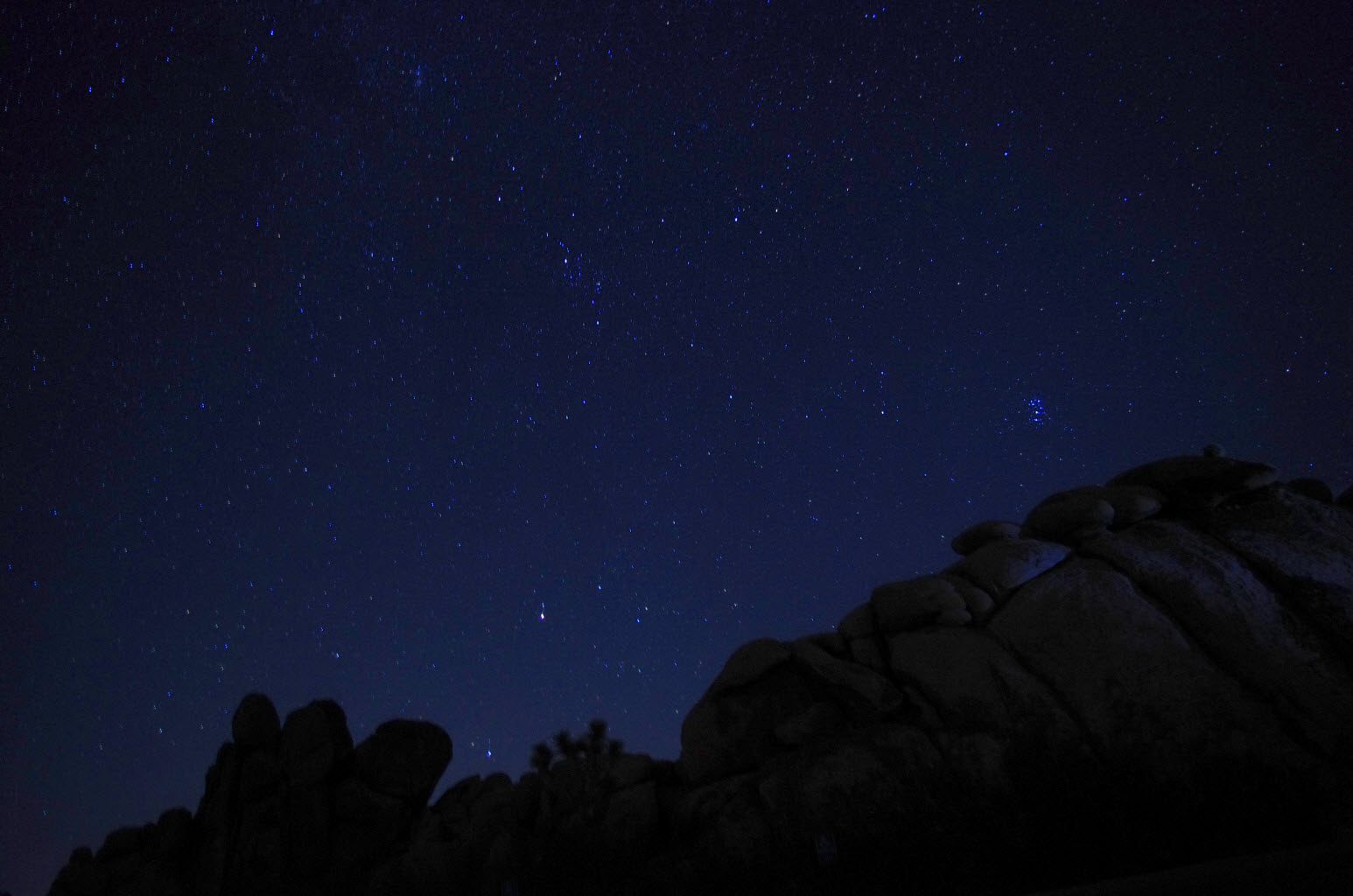 Joshua Tree Night and Stars